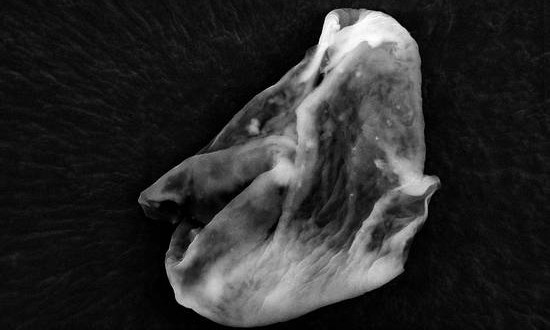 British scientists claim to have found proof of alien life
