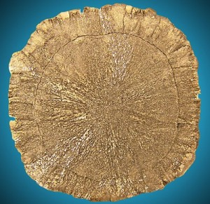 Flint Disc Illinois 4¾ golden pyrite sun disc Sparta IL